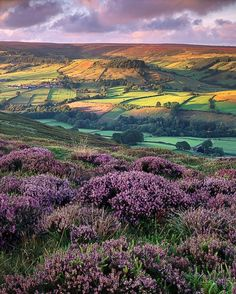 Rosedale, North Yorkshire – I've been to North Yorkshire but not sure I have been here!! Love the heather in front of the photo!