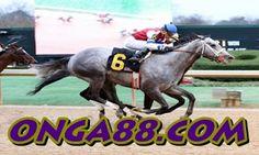 무료체험머니♠️♠️♠️ONGA88.COM♠️♠️♠️무료체험머니: 무료체험머니 ❄️❄️❄️ONGA88.COM ❄️❄️❄️ 무료체험머니 Horses, Animals, Animales, Animaux, Animal, Animais, Horse