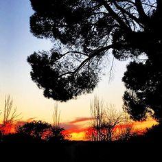 Зимний пылающий закат 🌅. #parquedeloeste #madridrus #agenciadeviajes #гидвмадриде #madrid 😍
