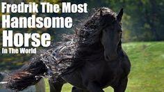I wish I had a horse named Michelangelo