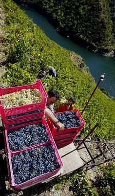 vendimia ribeira sacra  Galicia  Spain  500 metros desnivel.... Cities, Picnic Blanket, Outdoor Blanket, Rivera, Spanish Wine, Natural Salt, Cold Meals, Slow Food, Spain Travel