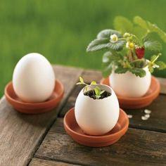 plantes dans des coquilles d'œufs