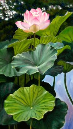 John Lautermilch Lotus Rising print for sale. Shop for John Lautermilch Lotus Rising painting and frame at discount price, ships in 24 hours. Lotus Flower Pictures, Lotus Flower Art, Lotus Art, Pond Painting, Lotus Painting, Flowers Nature, Beautiful Flowers, Beautiful Beautiful, Lotus Pond