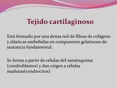 próstata epilobica