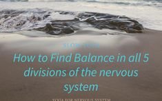 How to Find Balance in all 5 Divisions of the Nervous System Enteric Nervous System, Peripheral Nervous System, Fight Or Flight Response, Motor Neuron, Chronic Stress, Central Nervous System, Body Organs, Neurons, Yoga Benefits
