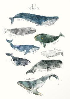 Whales print by Amy Hamilton