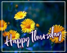 Beautiful Happy Thursday Image edited with yellow flowers and blue background for Wish Someone A Beautiful Happy Thursday. Happy Thursday Images, Wishes Images, Image Editing, Blue Backgrounds, Yellow Flowers, Beautiful, Editing Pictures