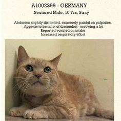 TO BE DESTROYED 6/12/14 ** SENIOR ALERT! FRIENDLY  SWEET GERMANY IS NOT FEELING WELL, NEEDS TO SEE A VET!! ** Manhattan Center  My name is GERMANY. My Animal ID # is A1002399. I am a neutered male org tabby domestic sh mix. The shelter thinks I am about 12 YEARS old.  I came in the shelter as a STRAY on 06/07/2014 from NY 10468