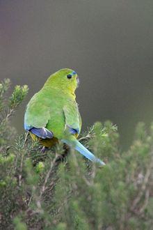 #WesternTreatmentPlant #Werribee #BirdWatching