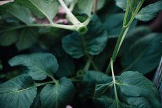 Pinzieren – kräftige Pflanzen, üppige Blüte – Aus dem Garten