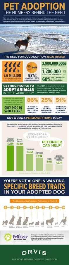 Pet Adoption: The Numbers Behind The Need | Dog Adoption Info | Dog Infographic | Dog Tips |