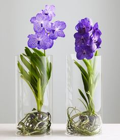 Gardens Vases And Pink On Pinterest