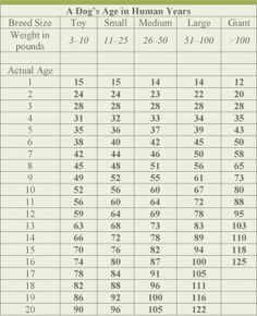 Dog age chart dog years to human years dog years calculator and dog a very accurate dog age chart ccuart Image collections