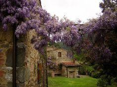 wisteria wrapped Tuscan villa