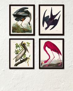 Vintage Audubon Sea Birds Print Set No. 2 Giclee by BelleMaisonArt