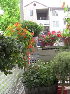 Some nice photos of a tiny patio garden. Good mix of flowers and edibles.