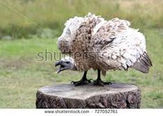 Image result for ANGRY VULTURE Vulture, Garden Sculpture, Outdoor Decor, Animals, Image, Animaux, Animales, Eagle, Animal