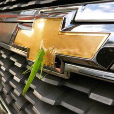 Sorte para o dono deste carro!  # #Chevrolet #Chevy #Carros | January 25 2017 at 12:37PM