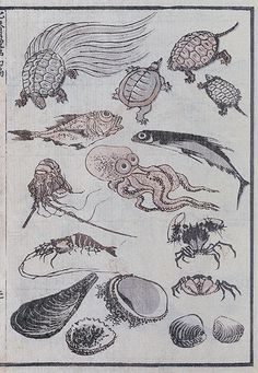 Undersea Creatures from The Hokusai Manga