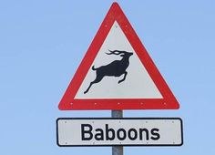 15 Funny Signs That Are Way More Confusing Than Helpful: That is one weird looking Baboon.
