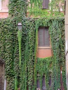 House with hanging plants, Trastevere, Rome, Italy