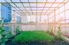 Urban farming: alternative agriculture - Investors Corner