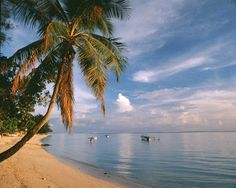 Beautiful Landscape Wallpaper, Beautiful Landscapes, Bora Bora, Tahiti, Beach Scene Wallpaper, Beach Wall Murals, Polynesian Islands, Murals Your Way, Travel Channel