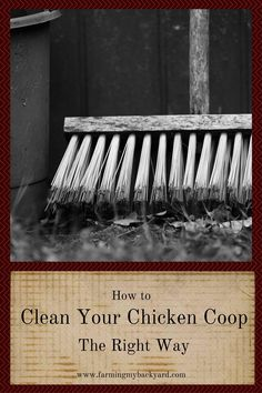 Clean your chicken coop the right way to make your chickens happy, prevent disease, discourage flies and appease the neighbors.