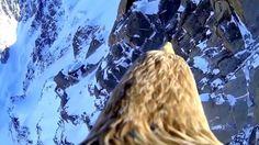 Полет #орла - вид сверху! Flight #eagle - view from above!