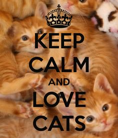 Keep Calm AND Love Cats. Another original poster design created with the Keep Calm-o-matic. Buy this design or create your own original Keep Calm design now. Crazy Cat Lady, Crazy Cats, I Love Cats, Cool Cats, Kittens Cutest, Cats And Kittens, Cat Love Quotes, Orange Cats, Here Kitty Kitty