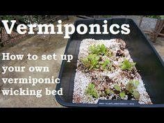 Growing with vermiponics Compost Tea, Worm Composting, Hydroponic Growing, Growing Plants, Organic Hydroponics, Wicking Beds, Farm Projects, Aquaponics System, Grow Lights