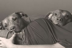 Perfect maternity picture with dogs