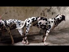 Animals Mating Funny Videos Wild Hd