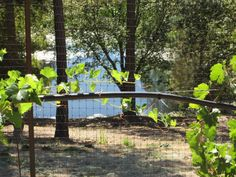 Waiting two more years to have our wine-making grapes. http://www.napaandbordeaux.com