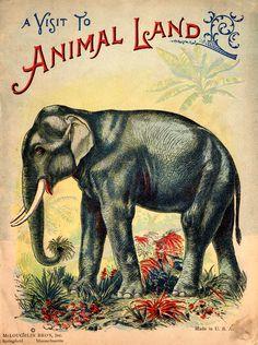 animallandweb