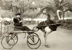 Bizarre Vintage Photographs