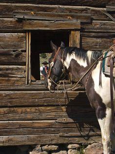 Ranch Living at The Ponderosa Ranch, Seneca, Oregon   by Joe Restuccia III
