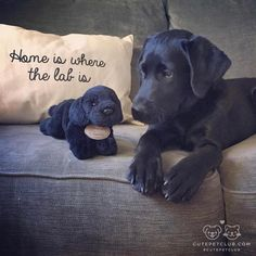 From @remi_theblklab #cutepetclub [source: http://ift.tt/2iNTV7E ]