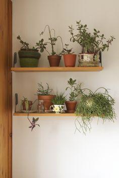 Indoor plant shelves--I love this. Potted Plants, Indoor Plants, Indoor Succulents, Indoor Garden, Home And Garden, Resurrection Fern, Flora, Plant Shelves, Wood Shelves