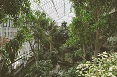 The Barbican's conservatory