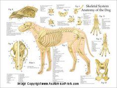 Click to View Skull Anatomy, Dog Anatomy, Animal Anatomy, Nerve Anatomy, Anatomy Organs, Heart Anatomy, Anatomy Drawing, Human Anatomy, Concept Art Landscape