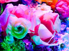 electric_blossom_0571.jpg