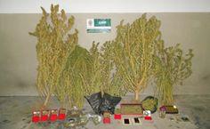 O Palhetas na Foz: Homem detido em Maiorca por tráfico de droga