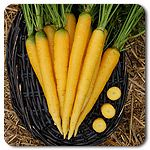 Easy To Grow Varieties - another great resource for organic seeds