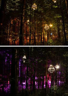 New Zealand's Redwoods Nightlights - A Suspended Tree Walk Surrounded by Custom Made Lght Fixtures