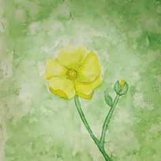 #watercolor #yellow #flower
