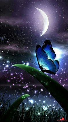 My wallpaper for home (original. Beautiful Nature Wallpaper, Beautiful Moon, Butterfly Wallpaper, Butterfly Art, Butterfly Quotes, Cute Wallpaper Backgrounds, Pretty Wallpapers, Ciel Nocturne, Butterfly Pictures