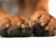 Use Vaseline on Your Dog's Paws in the Wintertime - 25 Hacks for Man's Best Friend