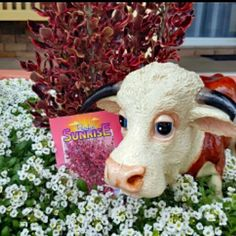 Ferdi simply loves Spring  and he loves flowers. He is busy helping out in the garden at the moment.vso busy in fact that he can't seem to hear Harry calling his name.