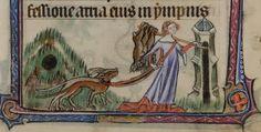 Kaninjakt med hund
